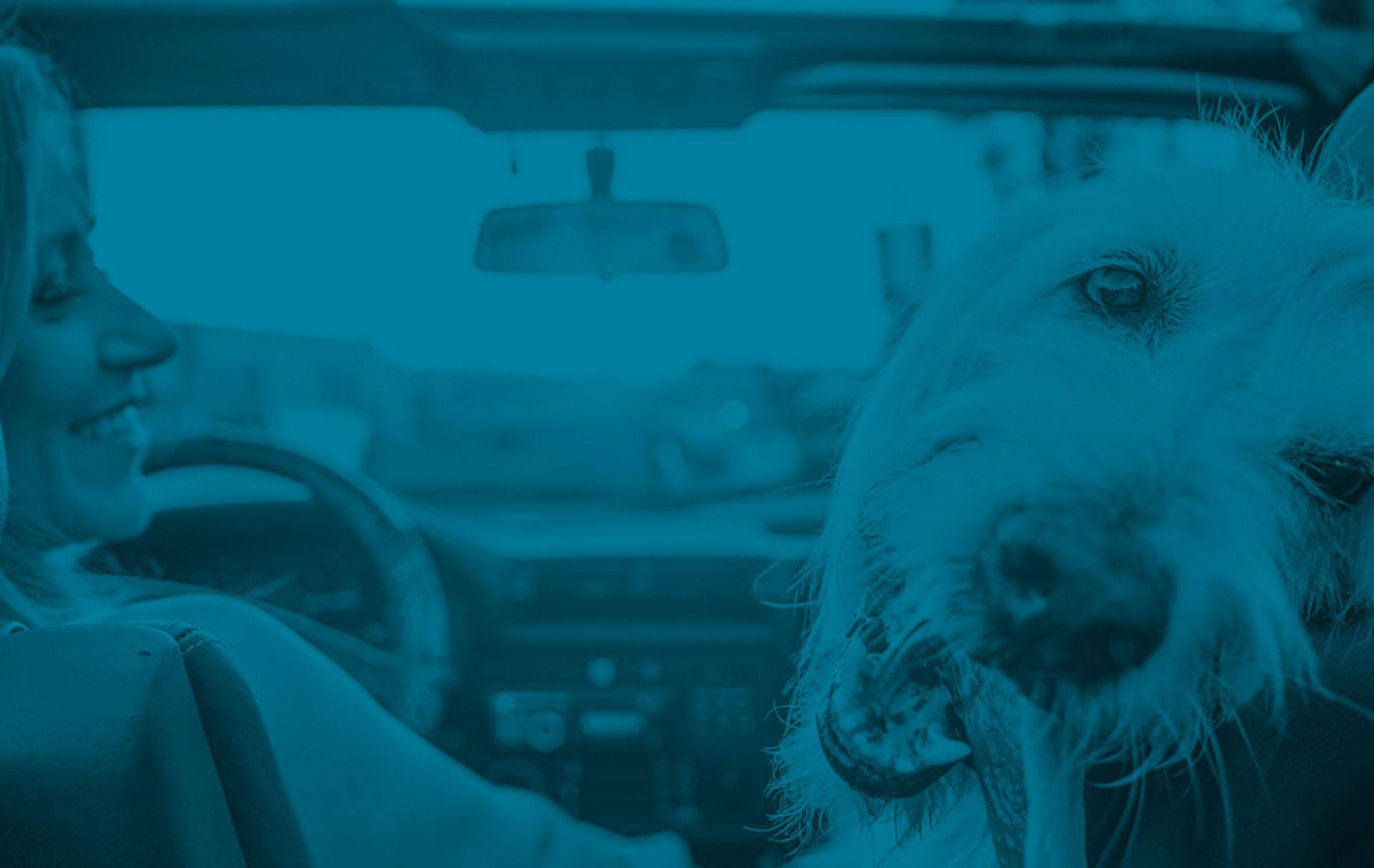 doggie one